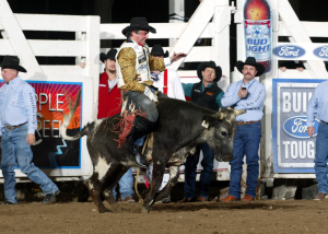 Dave Lieber riding a steer at Will Rogers Arena